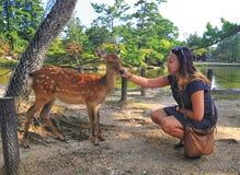 La fille caresse les cerfs communs photos libres de droits