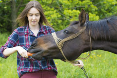 La fille d'adolescent alimente son animal familier de cheval Image stock