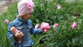 La fille d'enfant avec une poupée renifle l'arome des fleurs de pivoine banque de vidéos