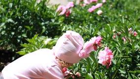 La fille d'enfant renifle l'arome des fleurs de pivoine Le bébé marche dans le jardin avec des pivoines clips vidéos