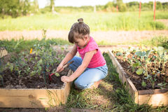 La fille d'enfant s'inquiète des légumes sur le jardin, écologie Image libre de droits