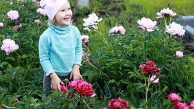 La fille d'enfant sent l'arome des fleurs de pivoine Le bébé marche dans le jardin avec des pivoines banque de vidéos