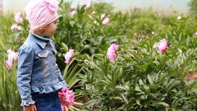 La fille d'enfant sent l'arome des fleurs de pivoine L'enfant marche dans le jardin clips vidéos