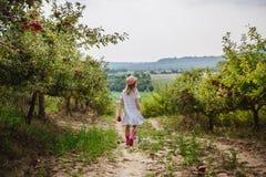 La fille dans des bottes de chapeau et de pluie marche avec la pomme douce dans le champ de pommiers photographie stock