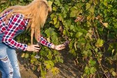La fille dans le vignoble Image stock