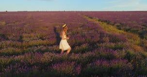 La fille dans un chapeau de paille et un bain de soleil léger marche le champ de la lavande Pousse aérienne clips vidéos