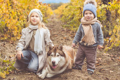 La fille et le garçon dans le vignoble marchent avec le chien enroué Images libres de droits