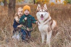 La fille et le garçon marchent avec le chien enroué Photos libres de droits