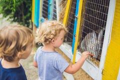 La fille et le garçon sont alimentés des lapins dans le parc animalier Photos libres de droits