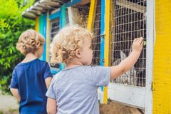 La fille et le garçon sont alimentés des lapins dans le parc animalier Photographie stock libre de droits