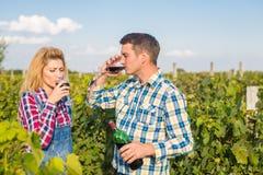 La fille et le type dans le vignoble Photographie stock