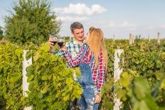 La fille et le type dans le vignoble Photos stock