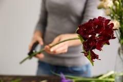 La fille font un bouquet au-dessus du fond gris, coupant la tige Photographie stock libre de droits