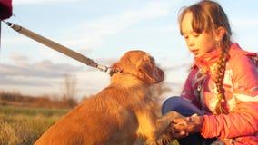 La fille frotte des chiens main, chien donne la patte à la fille banque de vidéos