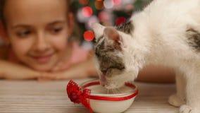 La fille gaie observant le petit chaton mangent du lait au temps de Noël banque de vidéos