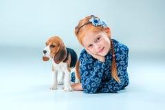 La fille heureuse et un puppie de briquet sur le fond gris Image stock