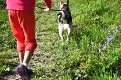 La fille jouant et s'exerçant commande le chien Photos libres de droits