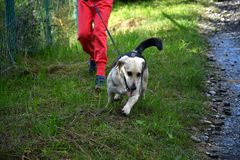 La fille jouant et s'exerçant commande le chien Images stock