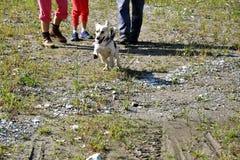 La fille jouant et s'exerçant commande le chien Images libres de droits