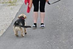 La fille jouant et s'exerçant commande le chien Photo libre de droits