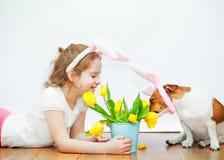 La fille mignonne et son chien d'ami avec des oreilles de lapin s'asseyent sur le plancher en bois Image libre de droits