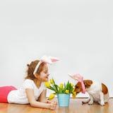 La fille mignonne et son chien d'ami avec des oreilles de lapin s'asseyent sur le plancher en bois Photo stock