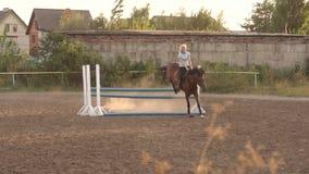 La fille montant un cheval saute par-dessus une barrière en bois clips vidéos