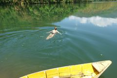 La fille nage dans le lac Images libres de droits