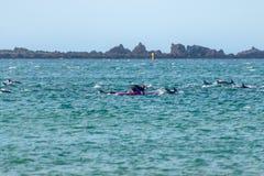 La fille nage pour jouer avec les dauphins communs du Nouvelle-Zélande Image stock