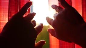 La fille ouvre les rideaux rouges et jouee avec ses mains par les rayons du ` s du soleil Plan rapproché de main clips vidéos
