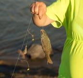 La fille a pêché les poissons sur l'amorce Photographie stock