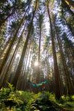 La fille qui reste dans l'hamac bleu regardant le ciel entouré par la forêt de sapin a placé dans les Alpes d'Allemagne images libres de droits