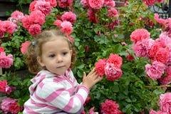 La fille réfléchie de trois ans dans la perspective d'un buisson des roses de floraison Image libre de droits