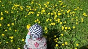 La fille rassemble des fleurs sur le champ des pissenlits banque de vidéos