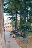 La fille s'asseyant sur le banc avec le téléphone Photos stock