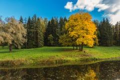 La fille s'assied sous un arbre en parc d'automne Images libres de droits