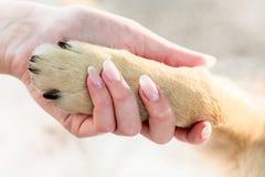 La fille tient la patte du ` s de chien dans sa main Le chien et la fille sont loyaux Images libres de droits