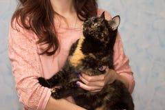 La fille tient soigneusement un chat de couleur de tortue Photo stock