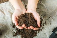 La fille tient la terre La fille transplantera les usines mises en pot à la maison La terre, jeune plante, ressort, mains, le con photos stock