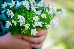 La fille tient un groupe de fleurs blanches de ressort dans des ses mains Promenade au forest_ photographie stock libre de droits