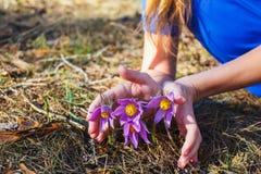 La fille tient une herbe rêveuse photographie stock