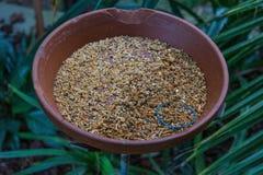 La fin de pot de nourriture pour oiseaux avec l'usine part à l'arrière-plan Photos stock
