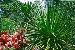 La fin de Sunny Tropical Leaves Sharp Bush vers le haut du vert de Bush de jungle de fond a saturé images stock