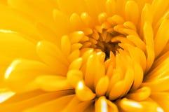 La fin horizontale vers le haut d'un jaune a monté Images stock