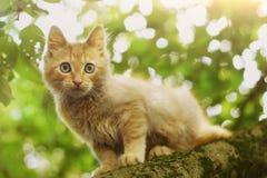 La fin rouge de chaton vers le haut de la photo sur l'arbre l'été pousse des feuilles Photo stock