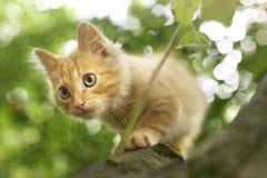 La fin rouge de chaton vers le haut de la photo sur l'arbre l'été pousse des feuilles Photographie stock libre de droits
