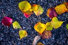 La fin vers le haut des feuilles de feuillage d'automne tombent à la terre avec l'asphalte contrastant foncé Photo stock