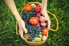La fin vers le haut des mains rassemblent la tomate et les raisins frais avec des pêches dans le panier sur l'herbe image stock