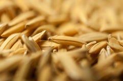 La fin vers le haut du riz non-décortiqué a pour ne pas écosser  Diffusion du riz de jasmin de paddy pour sécher au soleil la Tha Photographie stock libre de droits