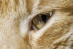 La fine arancio del gatto su osserva Immagini Stock
